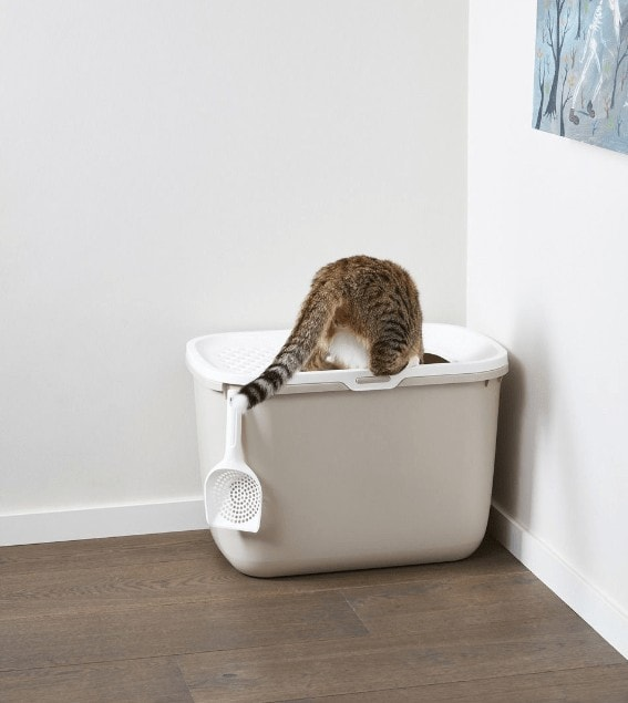 Ervaring Hop In Kattenbak
