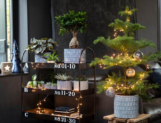 Kerstboom trends en inspiratie voor een gezellig huis