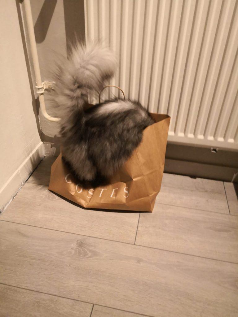 De leukste kattenfoto's van Mila