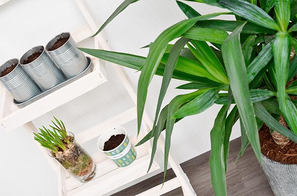 DIY: moes- of kruidentuintje onderhouden