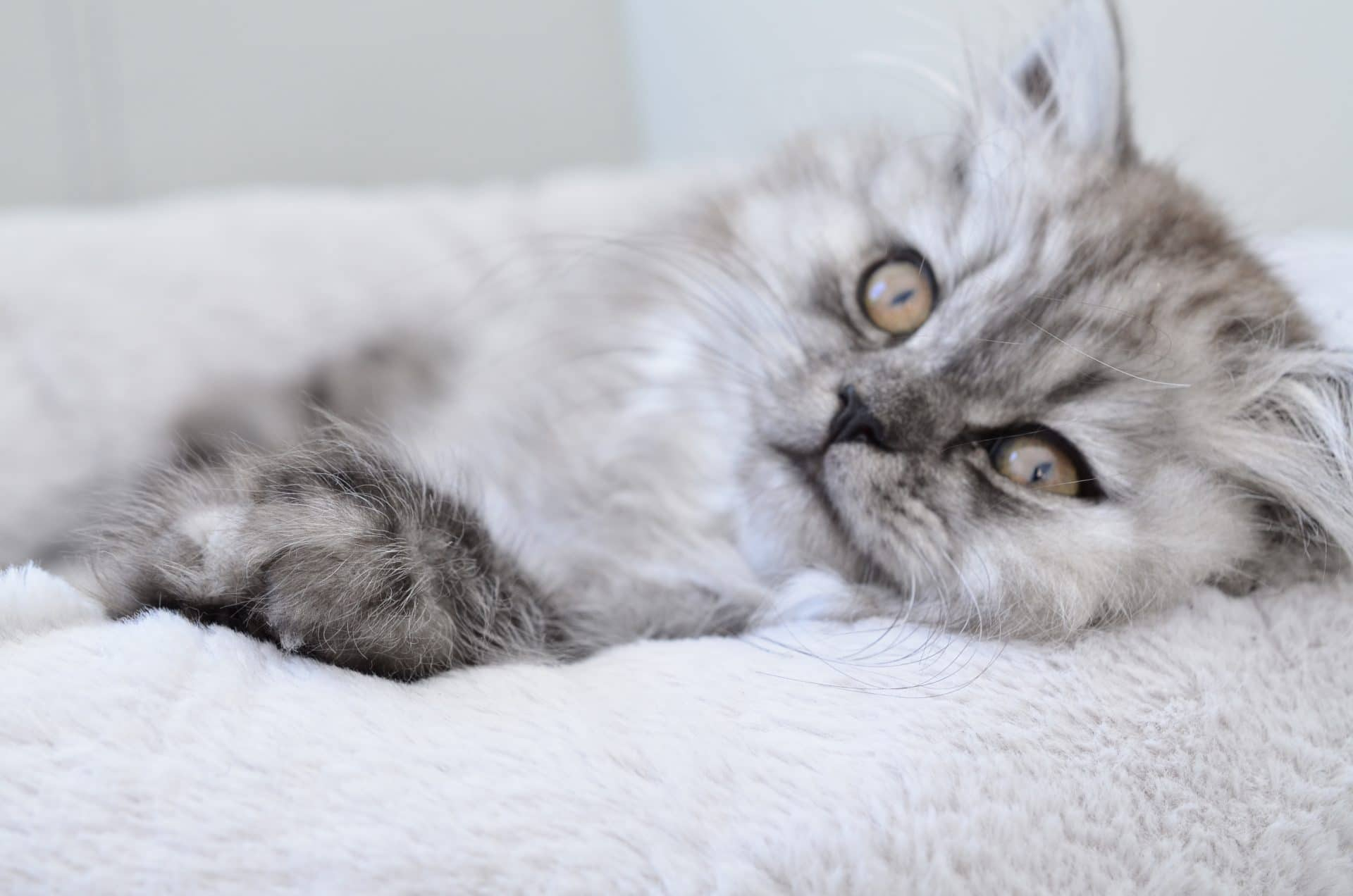 Een kitten in huis, hoe bevalt dat nou?
