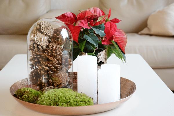 Woonkamer make-over met Kerststerren + win