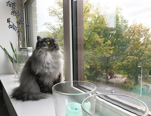 10 hilarische momenten die elk kattenbaasje herkent