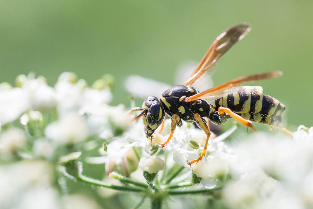 Zo hou je vervelende insecten op een afstand!