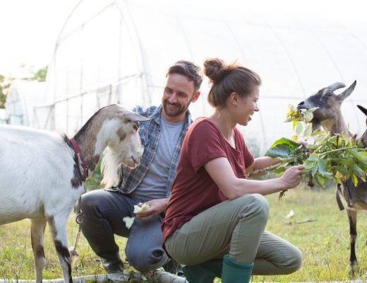 Boer zoekt vrouw praat – de reünie
