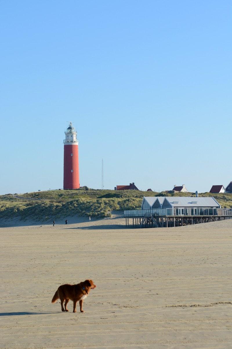 Texel vakantie