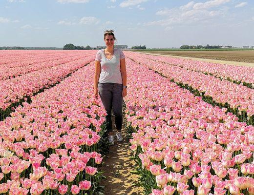 Tip: Tulpenroute door de Flevoland polder